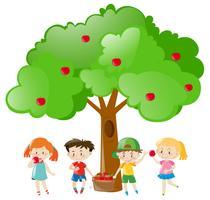 Kinder, die Äpfel auf dem Baum auswählen