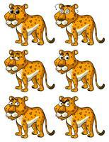 Gepard mit verschiedenen Emotionen