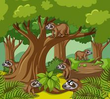 Faultiere leben im Wald
