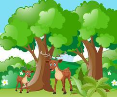 Hjort och liten fawn i skogen