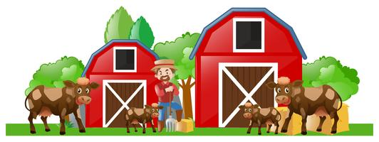Bauer und viele Kühe auf dem Hof