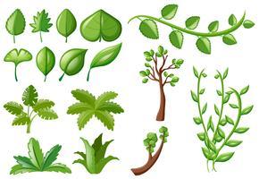 Verschiedene Arten von grünen Blättern vektor