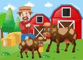 Bonde och kor på gården