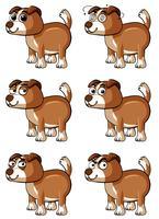 Brun hund med olika ansikts känslor vektor