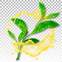 Realistische Teeblätter. Spritzen Sie mit Tropfen. Vektor-Illustration