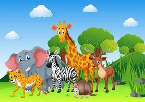 Wilde Tiere im Feld