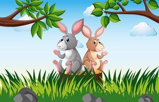 Två kaniner på stubben