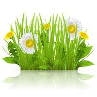 Gänseblümchen, Löwenzahn und Gras auf einem weißen Hintergrund. Realistische Vektorgrüns