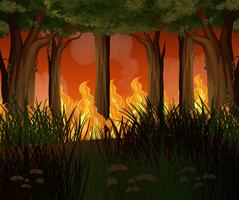 En skog med vildmarkskatastrof