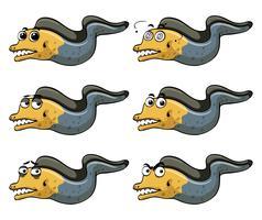 Aal mit verschiedenen Emotionen