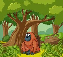 Orang-Utan lebt im Wald