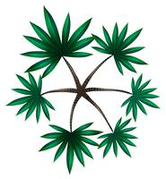 En toppvy av en palm vektor