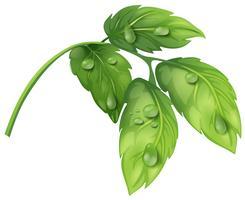 Grüne Blätter mit Wassertau