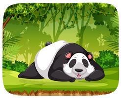 En panda i djungelscenen