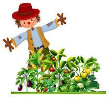 Scarecrow och många typer av grönsaker i trädgården