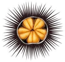 urchin vektor