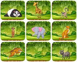 Set von Tieren in Dschungelszenen