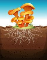 Pilz im Boden vektor