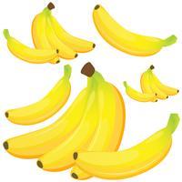Banane auf weißem Hintergrund vektor