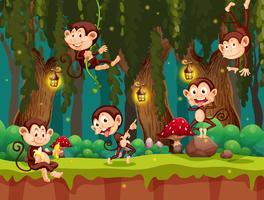 En grupp apa i djungeln