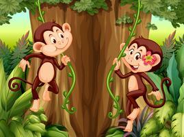 Apa hänger från vinstockar