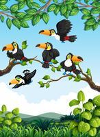 Grupp av toucan i naturen