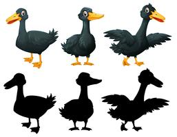 Set der schwarzen Ente auf weißem backgroung vektor