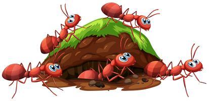 Feuerrote Ameisen und Loch vektor