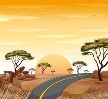 Savanna scen med tom väg vid solnedgången