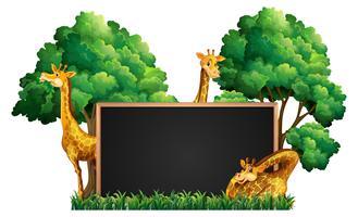 Blackboard med vilda giraffer i parken vektor