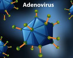 Närbildsdiagram för adenovirus