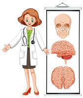 Kvinnlig läkare och brian diagram