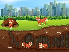 Eine Fox-Familie, die im Untergrund lebt