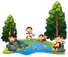 Eine Gruppe von Affen am Fluss