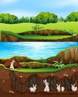 Kaninchenfamilie, die in der Natur nahe bei Fluss lebt