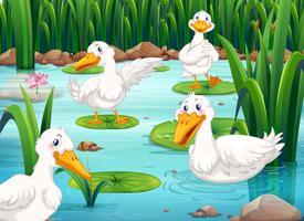 Vier Enten, die im Teich leben