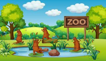 Otter i djurparken vektor