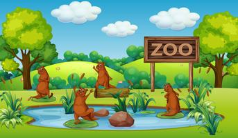 Otter im Zoo vektor