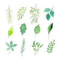 akvarellblad och grenar vektor