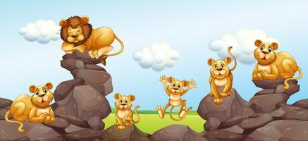 Löwenfamilie auf dem Feld vektor