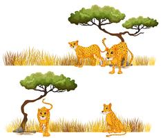 Gepard auf dem Feld