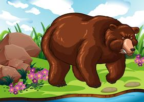 Grizzly björn står vid floden