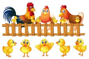 Hühnerfamilie mit fünf kleinen Küken
