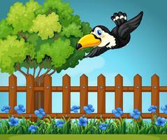 Toucan flyger på himlen vektor