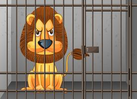 Löwe im Käfig eingesperrt