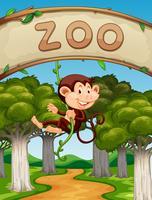 Apa hänger på vinstockar i djurparken