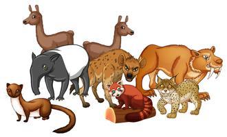 Gruppe wilde Tiere