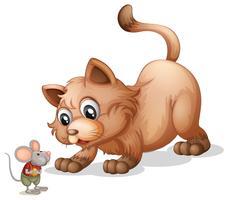 Brun katt tittar på lilla musen