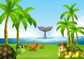 Tiere und Ozean
