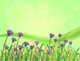 Violetta blommor i trädgården vektor